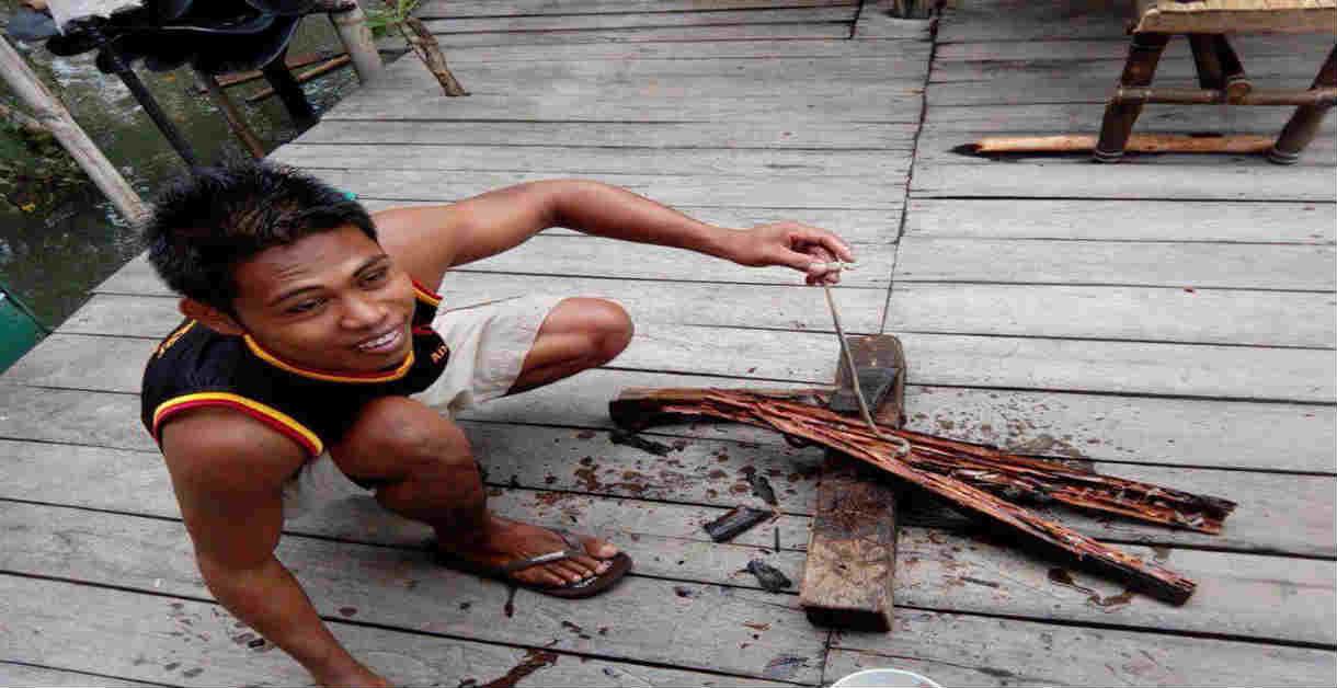 best tamilok (woodworm)