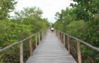 Anim Na Mga Bagay Tungkol sa Bakhawan Eco-Park sa Kalibo