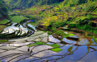 Banaue – Painterly Dreams