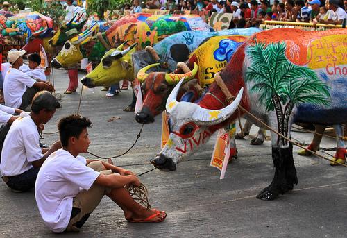 Carabao festival